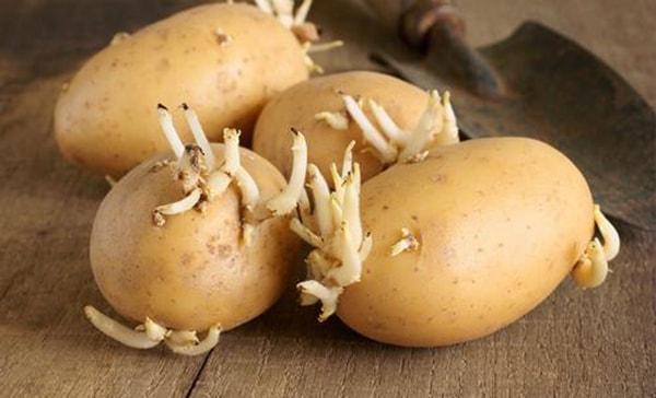 Khoai tây mọc mầm có thể gây ung thư
