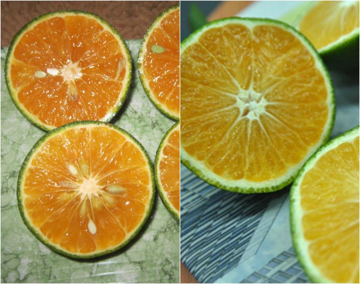 Làm sao để phân biệt cam Việt Nam và cam Trung Quốc?