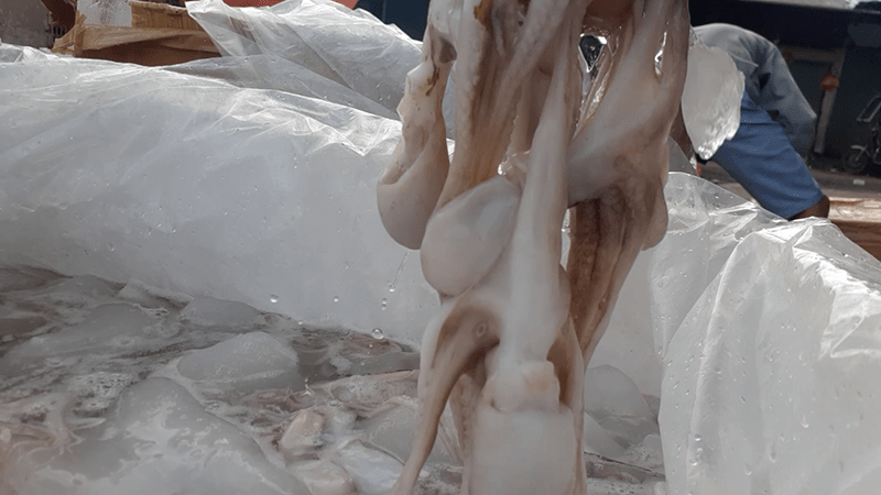 Bạch tuộc bị ngâm hóa chất gây độc
