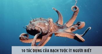 10 tác dụng của bạch tuộc ít người biết