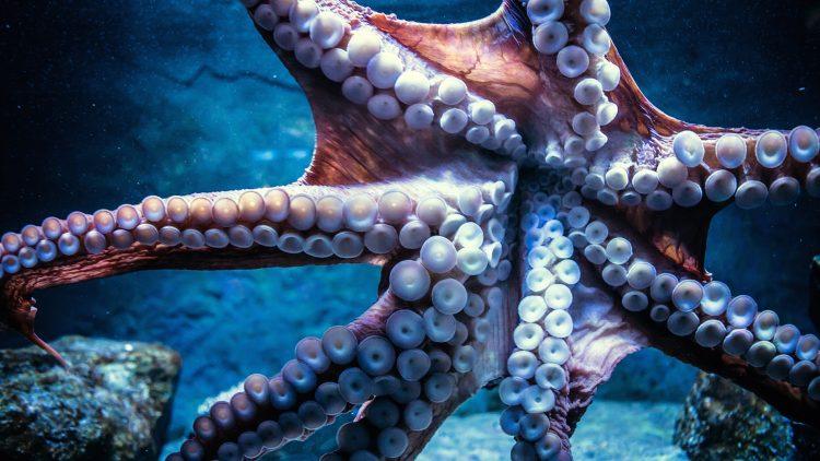 bạch tuộc có khả năng phân biệt màu sắc và hình dạng