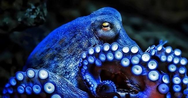 bạch tuộc