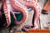 Cách làm 6 món ăn ngon từ bạch tuộc đơn giản, hấp dẫn