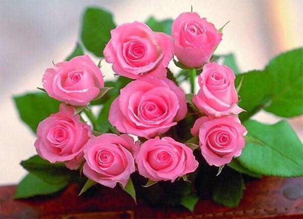 Hoa Hồng - loài hoa không thể thiếu khi tặng thầy cô