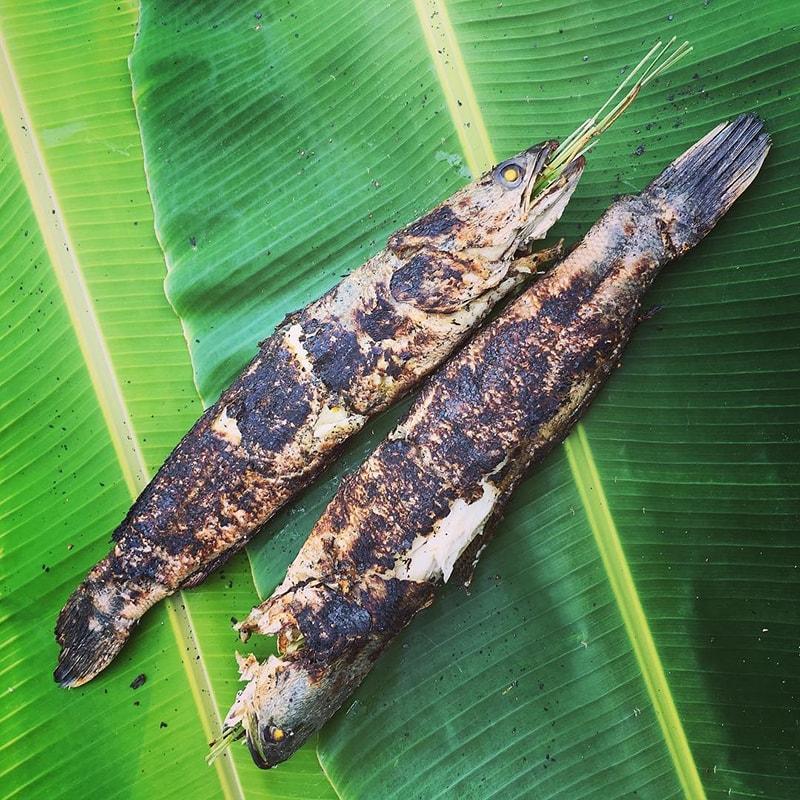 Cá lóc nướng trui sẽ càng thơm ngon hơn khi được ủ trong lá sen tươi