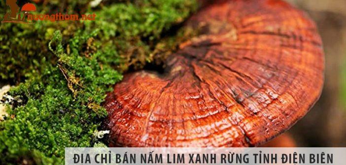 Địa chỉ bán nấm lim xanh rừng tự nhiên tỉnh Điện Biên
